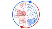 Communication Brain and Heart