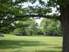 EGM FAR Golfers Framed by Grogeous Trees
